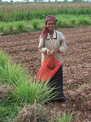 khmer_woman_fields.jpg